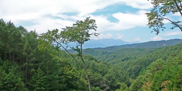 第15回 そうだ!日本の木を使おう ──ちょっと話したくなる木の話
